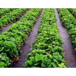 Fekete gyomnövényes gyapjú (agrotextil) - talajtakaráshoz - 1,60 x 10,00 m -