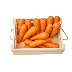 "Carrot ""Chantenay"" - very early variety - 2550 seeds"
