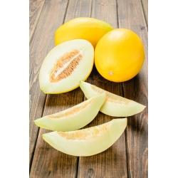 Sárgadinnye - Oliwin - Cucumis melo L. - magok