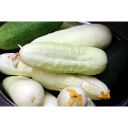 "White cucumber ""White Wonder"" - 80 seeds"