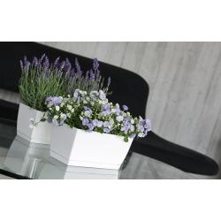 Прямоугольный цветочный горшок с блюдцем - Coubi - 24 х 12 см - Молочный кофе -