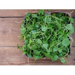 Watercress - 400 seeds