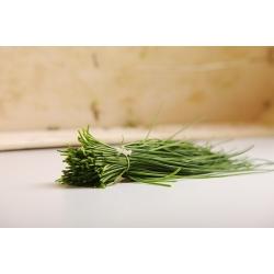 BIO - Hẹ - hạt hữu cơ được chứng nhận - 850 hạt - Allium schoenoprasum L.