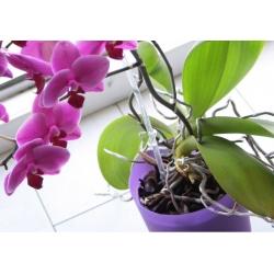 Цветочный горшок для орхидеи - Coubi DSTO - 12,5 см - Розовый мат -