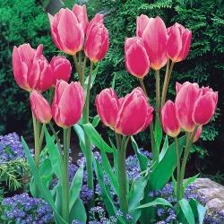 Tulipa Happy Family - Tulip Happy Family - 5 lampu
