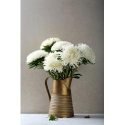 Каллистефус китайский - белый - 500 семена - Callistephus chinensis
