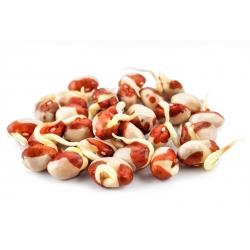 Ростки - семена - Фасо́ль обыкнове́нная - Adzuki - 550 семена - Vigna angularis