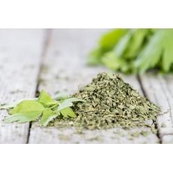 Aedseller - Green cutting - 520 seemned - Apium graveolens