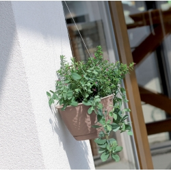 Hanging flower pot with saucer - Ratolla - 22 cm - Mocca