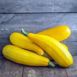 "Zucchini ""Goldena"" - 27 seeds"