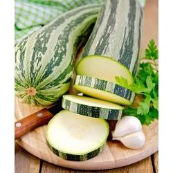 """Zucchini """"Tapir"""""""