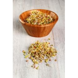 Sprouting seeds - radish - 100 g - 8500 seeds
