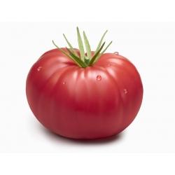 "Field tomato ""Warsaw Raspberry"" - 175 seeds"