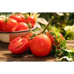 "Tomato ""Slonka F1"" - greenhouse variety"