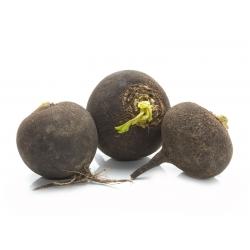 "Winter radish ""Kulata Cerna"" ""Black Ball"" - 400 seeds"