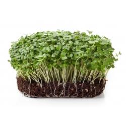 BIO - Rocket sprouting seeds - certified organic seeds; Arugula, Eruca - 2000 seeds