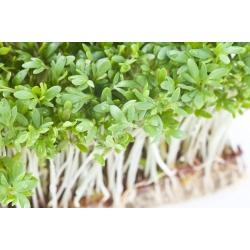 BIO - Bittercress sprouting seeds - certified organic seeds; Cardamine - 13500 seeds