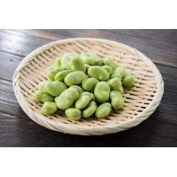 "BIO - Garden broad bean ""Superaguadulce"" - certified organic seeds"