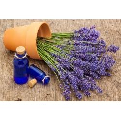 """Koduaed - Lavendel """"Munstead Strain"""" - sise- ja rõdu kasvatamiseks; kitsaroheline lavendel, aia lavendel, inglise lavendel - 200 seemet - Lavandula angustifolia - seemned"""