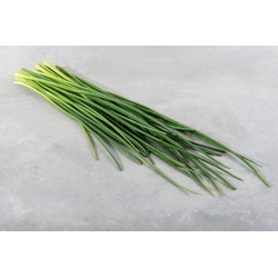 """Home Garden - Spring onion """"Broad Leaf"""" - for indoor and balcony cultivation - 1700 seeds"""