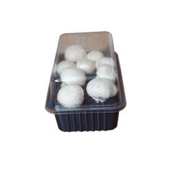 White field mushroom for home and garden cultivation - 3 l