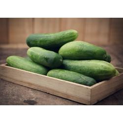 "Cucumber ""Delicius"" - delicious salad, field variety - 200 seeds"
