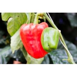 """Pepper """"Ozarowska"""" - red, sweet variety - 90 seeds"""