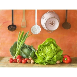 """Lettuce """"Saba"""" - for all-year cultivation - 900 seeds"""