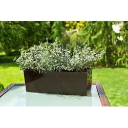 "Jardinera de flores ""Begonia"" - 19 x 56 cm - marrón moca -"