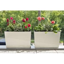 """Kvetináč / kvetináč """"Werbena"""" - 19 x 56 cm - krémovo-biela -"""