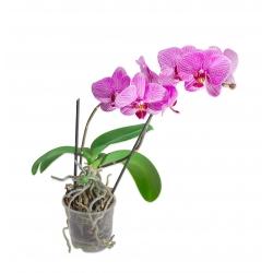 """Прозрачный горшок для орхидей """"Amazone"""" - ø 21 см -"""