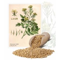 Біла споживча гірчиця - 1 кг - 130000 насіння