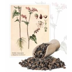 Sējas griķi - 1 kg - Fagopyrum esculentum - sēklas
