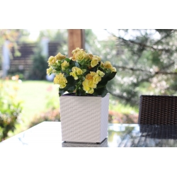 """Juka"" square flower pot - 19 cm - white rattan"
