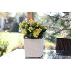 """Juka"" square flower pot - 30 cm - white rattan"