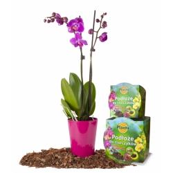 Orchid soil with a pot - Planta - 15 cm
