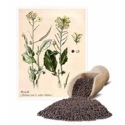 """اللفت والاغتصاب ، والخردل الميدان """"براشينا"""" - 1 كجم - Brassica rapa L. subsp. Oleifera - ابذرة"""