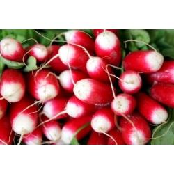 "Eighteen-Days Radish ""De dix-huit jours"" - PELLETED SEEDS - 300 seeds"