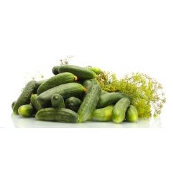 """Cucumber """"Krak"""" - field, pickling variety - COATED SEEDS - 50 seeds"""