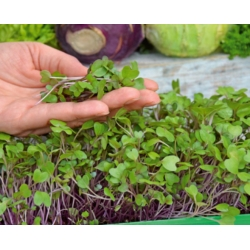 Microgreens - Kohlrabi - young leaves with exceptional taste - 1040 seeds