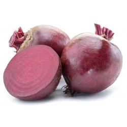 """BIO - Củ cải đường """"Detroit 2"""" - hạt hữu cơ được chứng nhận - 500 hạt - Beta vulgaris var. conditiva"""