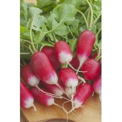 """BIO - Củ cải """"Bữa sáng kiểu Pháp 3"""" - hạt hữu cơ được chứng nhận - 425 hạt - Raphanus sativus L."""