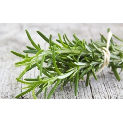 Home Garden - Rosemary - for indoor and balcony cultivation - 80 seeds