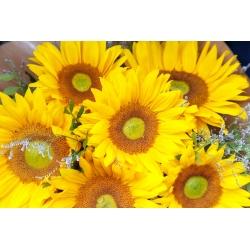 Harilik päevalill - Amor - Helianthus annuus - seemned