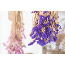 Lilla kuju, mere lavendel, sile lehtede roosmariin, mereroheline, wavyleaf mere lavendel - 105 seemnet -  - seemned