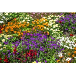 Annual low growing plants variety mix