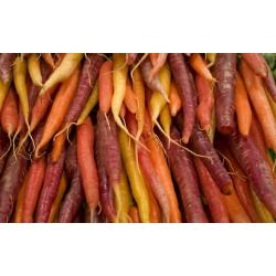 ترکیبی از انواع مختلف هویج - SEED TAPE - Daucus carota - دانه
