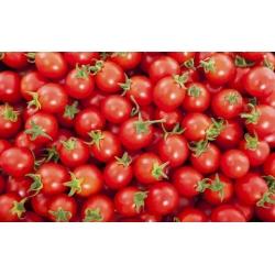 """گوجه فرنگی """"طلسم"""" - نوع کوکتل، تنوع کم رشد - SEED TAPE - Lycopersicon esculentum  - دانه"""
