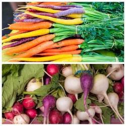 2 في 1 - الجزرة متعددة الألوان والفجل متعدد الألوان - SEED TAPE - Raphanus sativus  - ابذرة