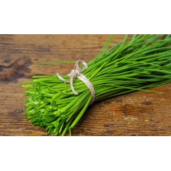 Chives - SEED DISC - 2 seeds